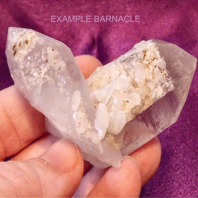 Barnacle Quartz Crystal